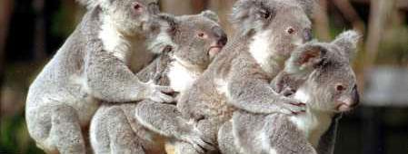 Koala Aids, Andy Rooney, and Unrewarding MyCokeRewards