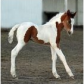 COLTS! Adorable? Yes!