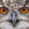 Owl F**ker