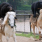 Bears on horses