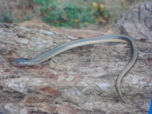 This is a snake. Probably.