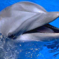 Dolphin-face-1