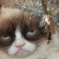 grumpy-ca1t