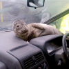 Riding in Cars with Seals