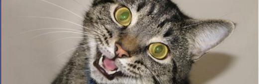 Cat Heroin